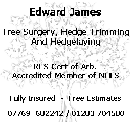 Advertisment for Trees and Hedges tree surgery, hedge trimming and hedge laying Milton Derbyshire