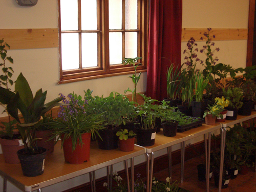 Plant Swap May 18th 2013 3
