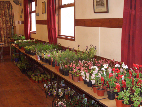 Milton Plant Swap May 18th 2013 2